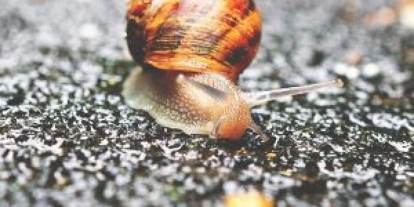 STEM Gen slug
