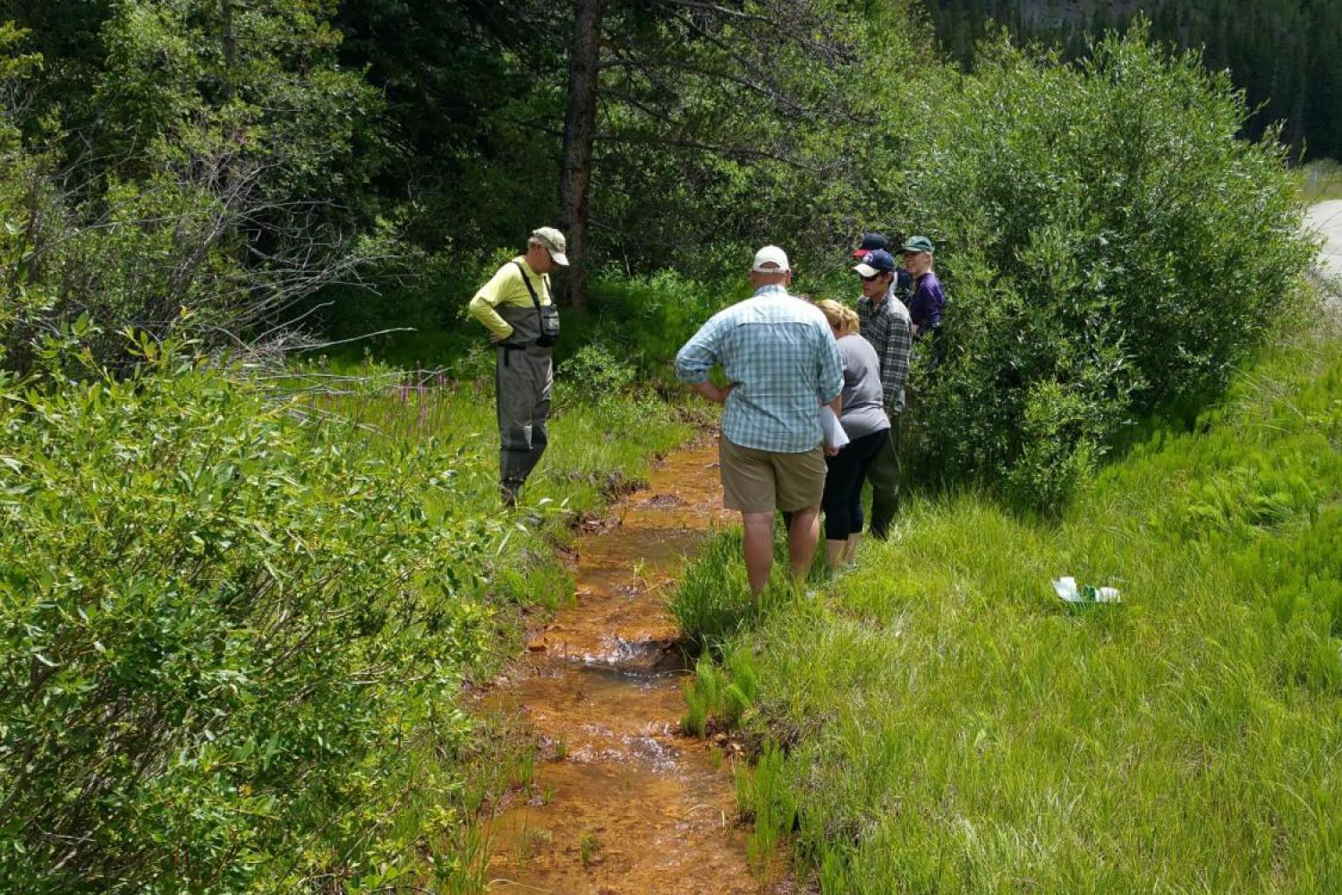 Students in the field doing environmental work