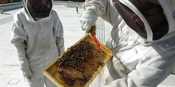 Beekeepers conducting research atop the Student Commons Building