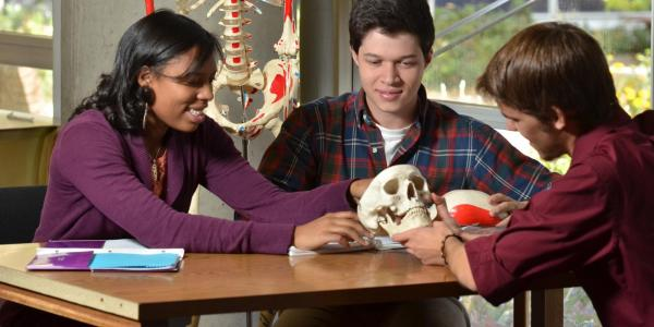 students studying skeleton