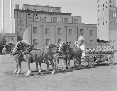 Photo of horse team outside of Tivoli Brewing