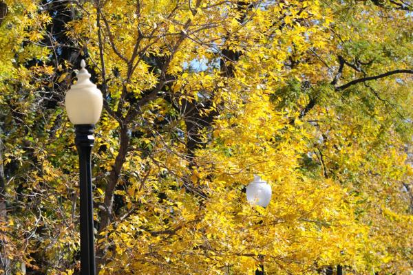 9th Street Park fall trees