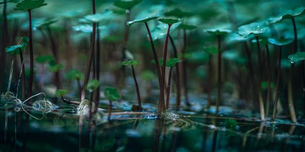 close-up photo of aquatic plants