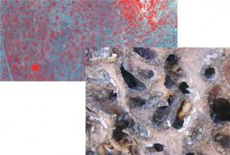 Termite photo