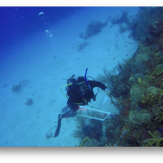 Dr. Anya Brown diving