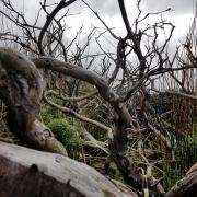 Trees on Cape Horn photo