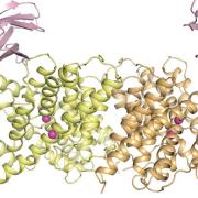 transmembrane channels & transporters photo