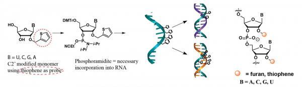 Photoactive RNA