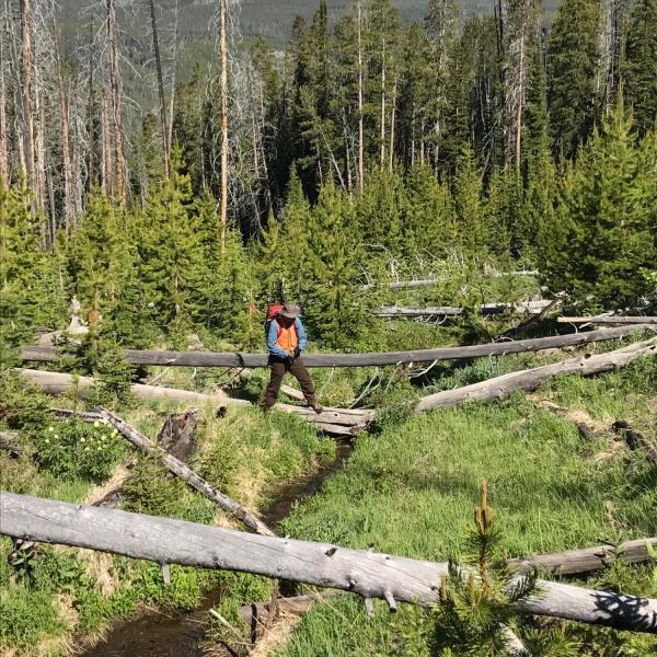 Researcher standing on fallen tree