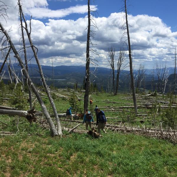 Researchers out in the field at Yellowstone