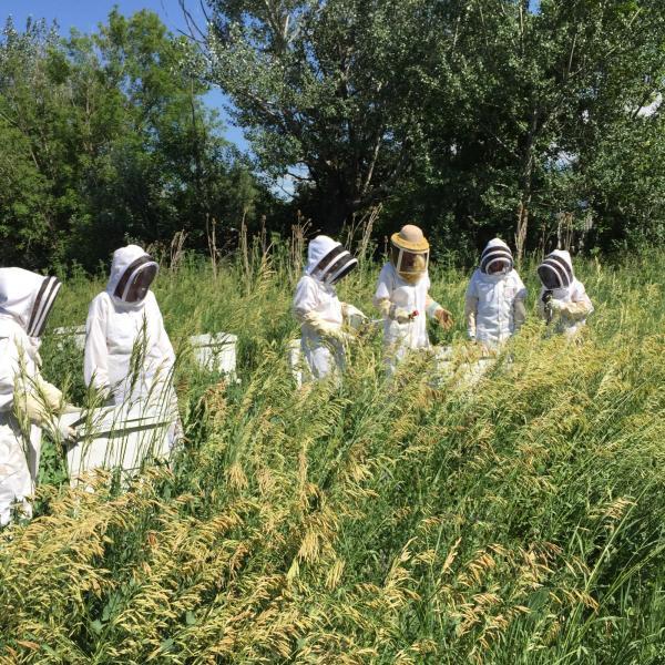 Researchers in beekeeper gear