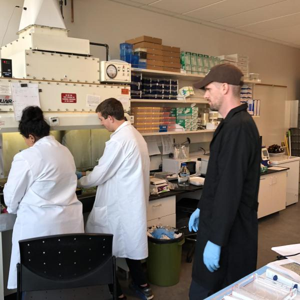 Student researchers working at a biosafety cabinet
