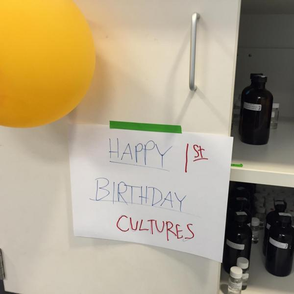 Lab cultures celebrating their first birthday