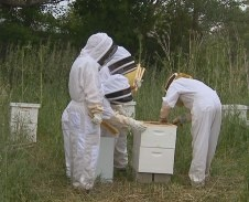 GES faculty working with honeybees